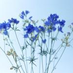 Flowers (32)