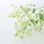 Flowers (33)