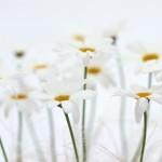 Flowers- (3)