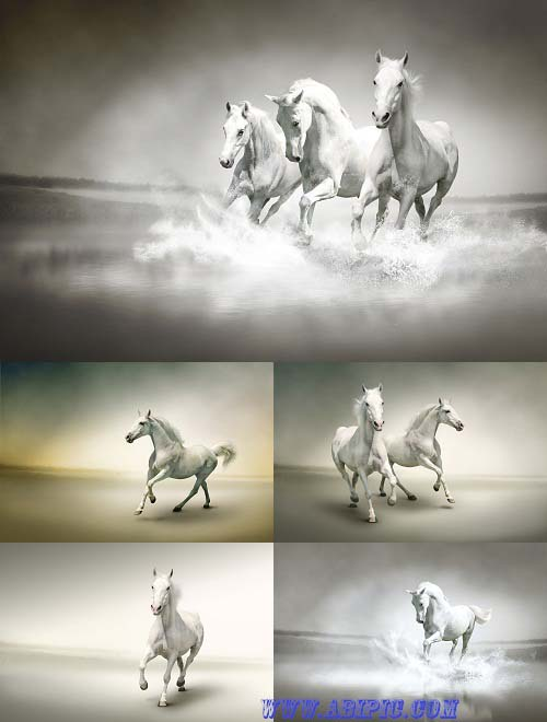 دانلود عکس استوک اسب سفید در حال دویدن Stock Photo White horse