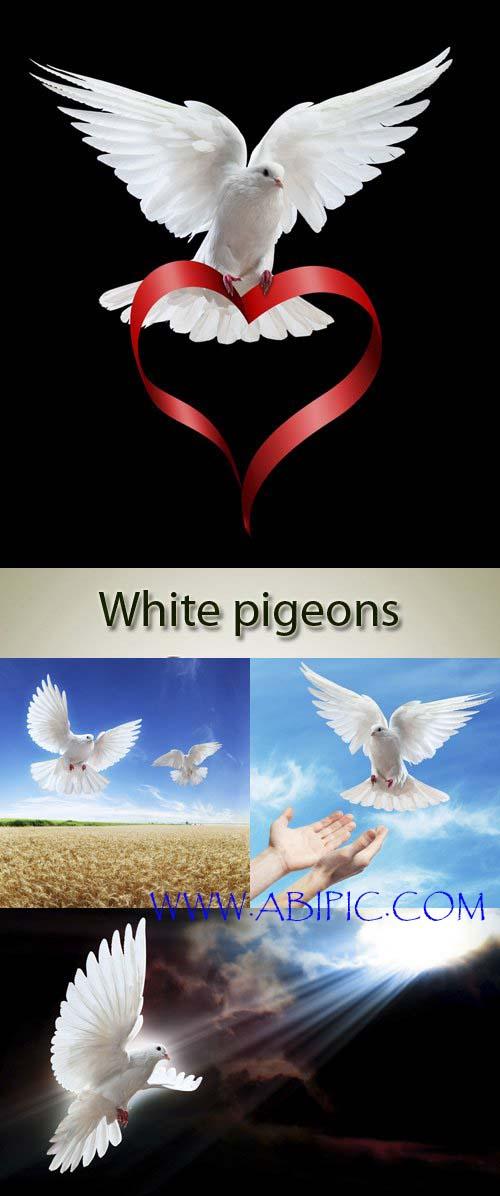 دانلود 5 عکس اتسوک کبوتر سفید در حال پرواز Stock Photo flying dove