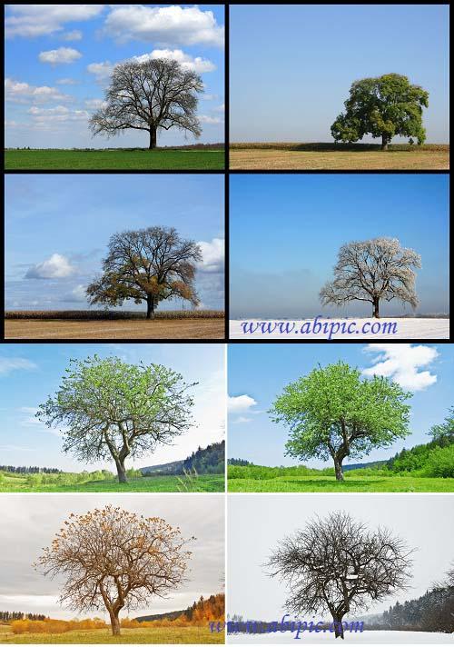 دانلود عکس استوک چهار فصل سال Stock Photo Four Seasons Of The Year