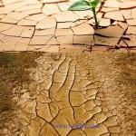 دانلود 5 تصویر شاتر استوک زمین خشک و ترک خورده Dry Land Stock Photo