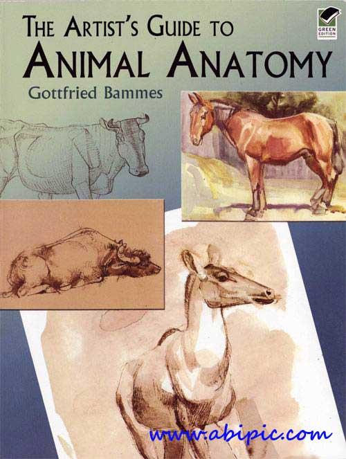 دانلود کتاب آموزش نقاشی: آناتومی حیوانات The Artists Guide to Animal Anatomy