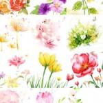 دانلود 22 طرح لایه باز زیبا از گل Flower Pack for Photoshop