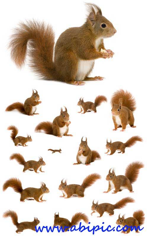 دانلود عکس شاتر استوک سنجاب Squirrel - UHQ Stock Photo