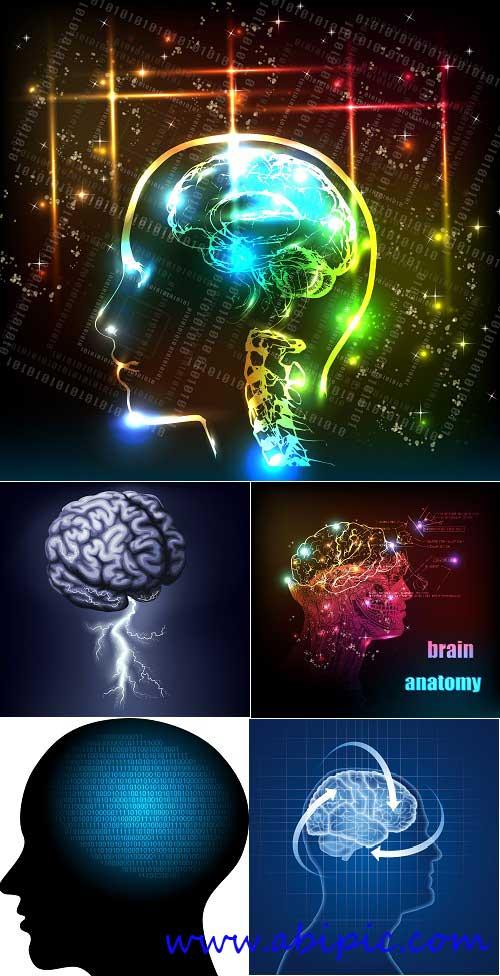 دانلود طرح وکتور با موضوع مغز انسان Human brain Stock Vector