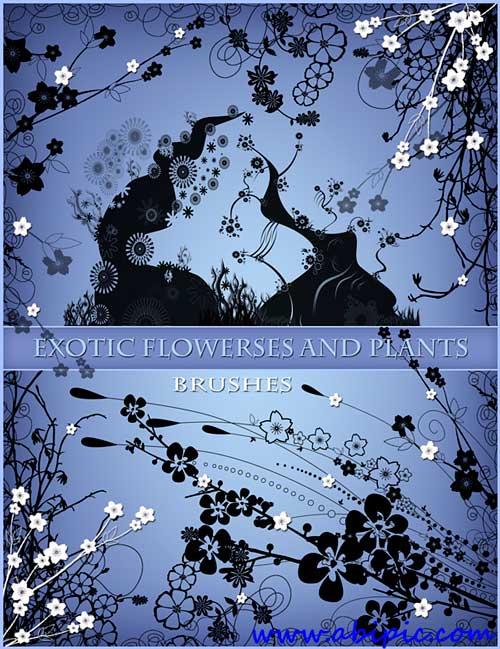 دانلود براش گل و بوته Photoshop Brushes - Exotic trees and flowers