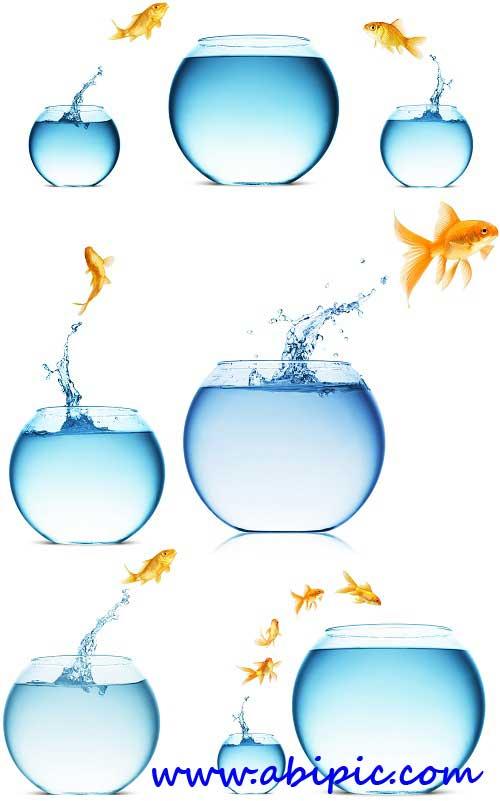 دانلود 5 عکس شاتر استوک ماهی قرمز و تنگ آب Aquarium and a Goldfish
