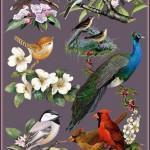 دانلود تصاویر کلیپ آرت از پرنده ها بر روی شاخه Cliparts – Birds in flowers