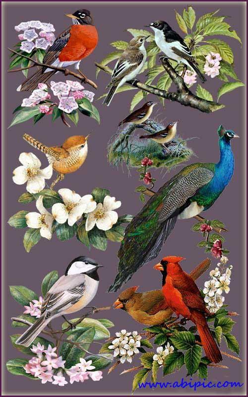 دانلود تصاویر کلیپ آرت از پرنده ها بر روی شاخه Cliparts - Birds in flowers