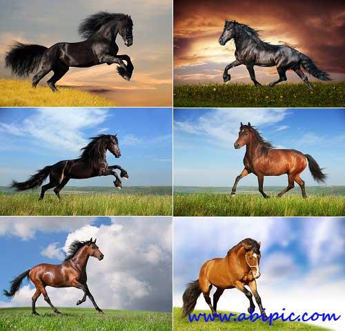 دانلود عکس استوک اسب شماره 2 Horses of different colors Stock photo