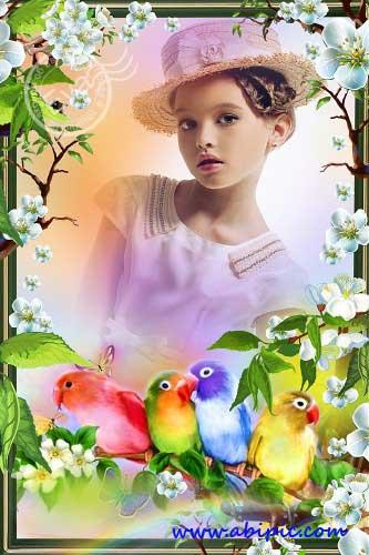 دانلود قاب عکس لایه باز با طرح طوطی Photo frame The Beautiful parrots