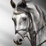 دانلود تصاویر بسیار زیبا از اسب