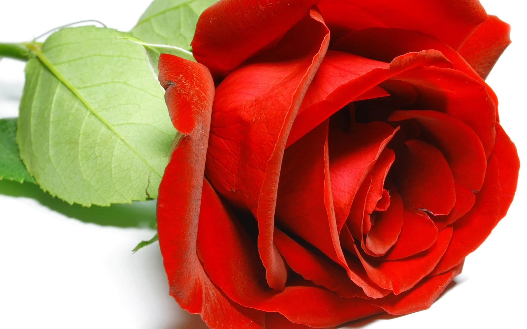نقاشی حاشیه گل آبی گرافیک | دانلود آموزش ،گرافیک و عکس