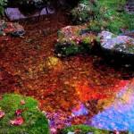 تصاویری بسیار زیبا از فصل پاییز