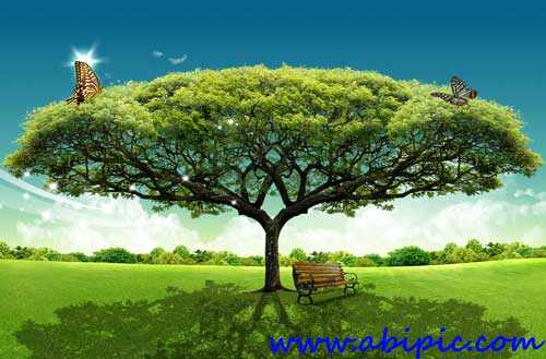 دانلود طرح لایه باز سورس درخت و منظره فتوشاپ Trees PSD layered material