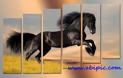 دانلود سورس لایه باز تصویر چند تکه ای اسب PSD sources Polyptych Horse jumps