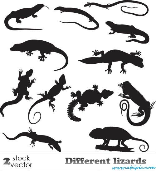 دانلود وکتور انواع مارمولک ها Vectors Different lizards
