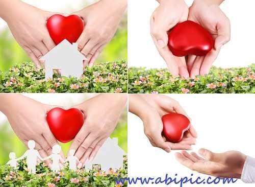 دانلود تصاویر استوک قلب در دست Heart in a hands - stock photo