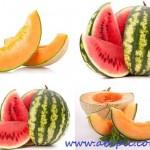 دانلود تصاویر استوک طالبی و هندوانه Melon and water-melon Stock photo