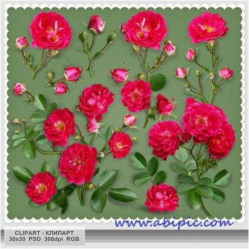 دانلود طرح لایه باز کیپ آرت گل رز Clipart PSD - Scarlet roses