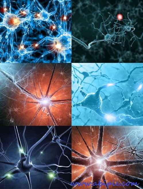 دانلود تصاویر استوک نورون HQ Images Neuron
