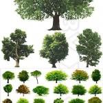 دانلود وکتور درخت های سبز سری 3 Green trees vector