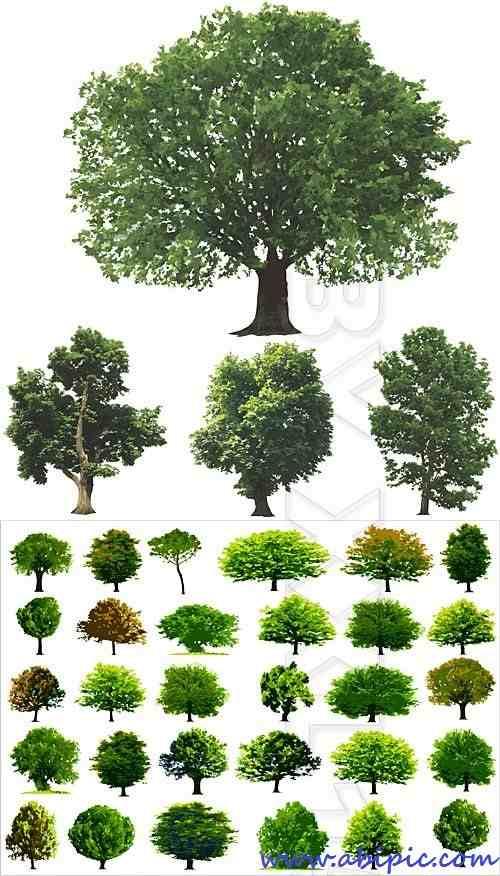 دانلود وکتور درخت های سبز Green trees vector