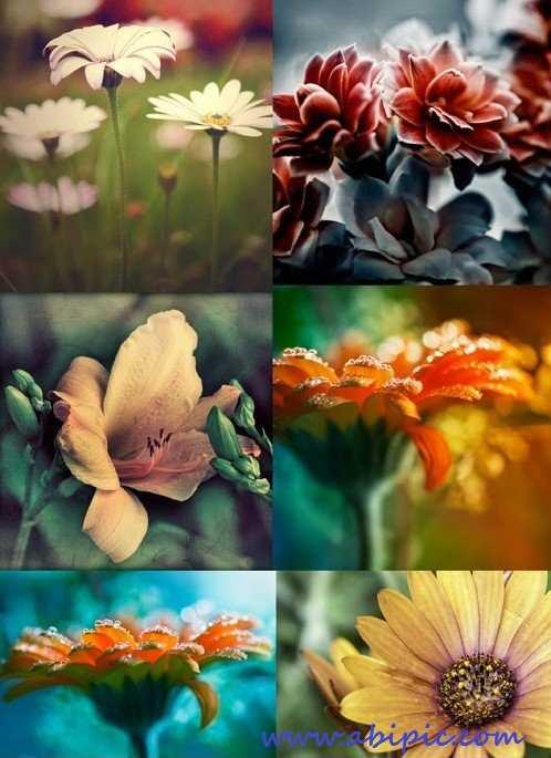 دانلود تصاویر استوک گل HQ Images Flowers
