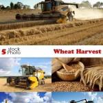 دانلود تصاویر استوک برداشت گندم Photos Wheat Harvest