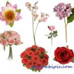 دانلود تصاویر پس زمینه شفاف گل برای طراحی Flower Scrap set 1