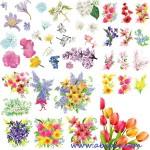 دانلود طرح وکتور انواع گل های بهاری Spring flowers – Stock Vectors