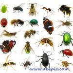 دانلود تصایر استوک حشرات مختلف با کیفیت بالا