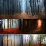 دانلود تصاویر استوک جنگل مه آلود و جادویی سری 2 Mystic forest during a foggy day