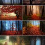دانلود تصاویر استوک جنگل مه آلود و جادویی Mystic forest during a foggy day