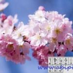 دانلود براش فتوشاپ گل و شکوفه