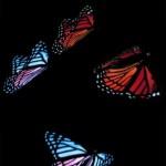 دانلود فتیج و کلیپ آماده پروانه Footage Rainbow Butterfly