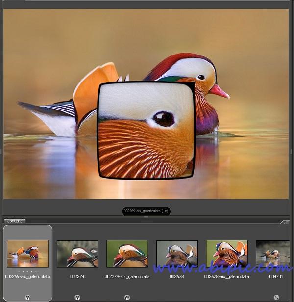 دانلود آموزش تصویری اصول پایه فتوشاپ برای افراد مبتدی قسمت 2 آشنایی با Adobe Bridge