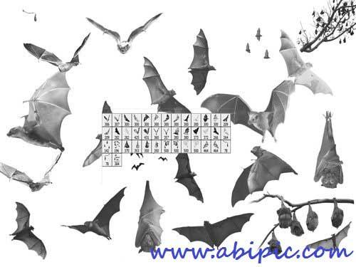 دانلود براش فتوشاپ خفاش Bat Photoshop brushes