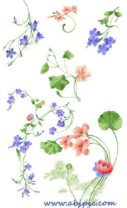 دانلود طرح لایه باز گل های وحشی Different wildflowers PSD