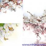 دانلود تصاویر استوک پس زمینه گل های بهاری Spring flowers