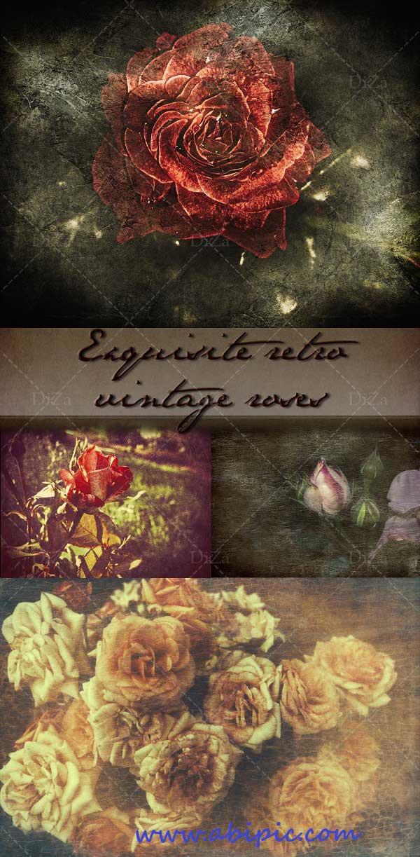 دانلود تاصور استوک گل رز گرانج Exquisite retro vintage roses