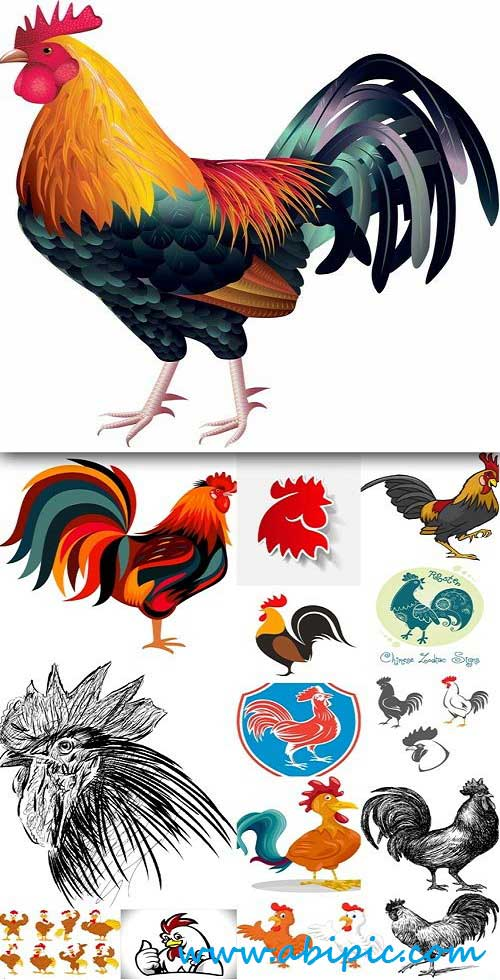 دانلود وکتور خروس Vector Rooster