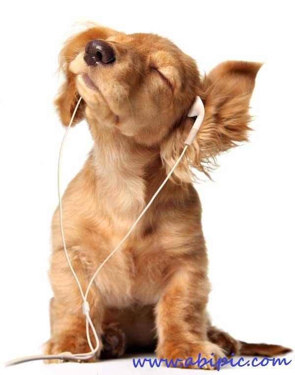 دانلود عکس استوک با موضوع موسیقی Music Stock Images