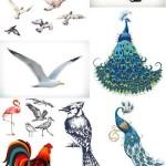 دانلود مجموعه وکتور انواع پرنده Birds vector
