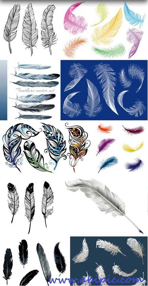 دانلود وکتور پر انواع پرنده Feathers vector